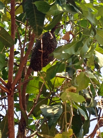 A beehive. Yai-Loh will harvest honey from the hive.