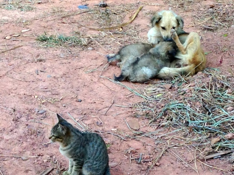 Puppies, their mother, and a cat. Cats and dogs are plentiful and breed often on these farms.